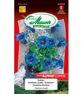 Swiss Alpine Flowers Gentiana