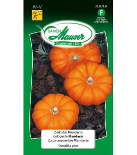 Coloquinte Mandarin